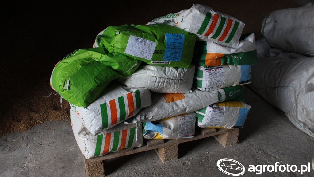 Kukurydza- materiał siewny