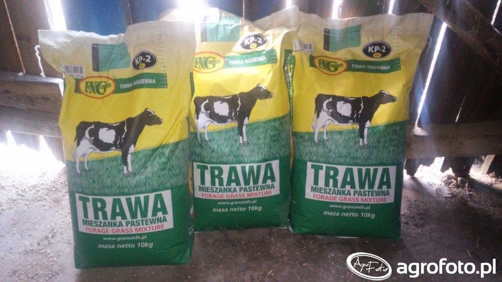 Nasiona traw Granum