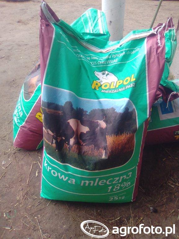 Pasza dla krów mlecznych
