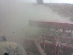 Uprawa ścierniska po kukurydzy