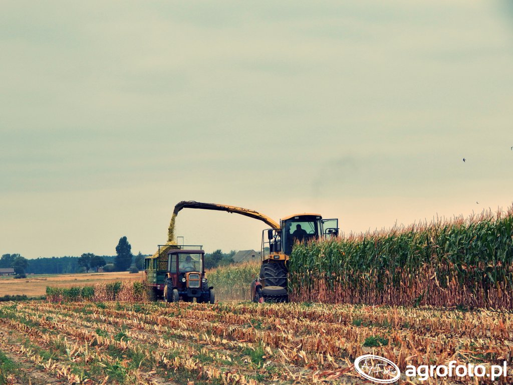 Kukurydza Na Kiszonkę Ursus C330 i New Holland FX 375