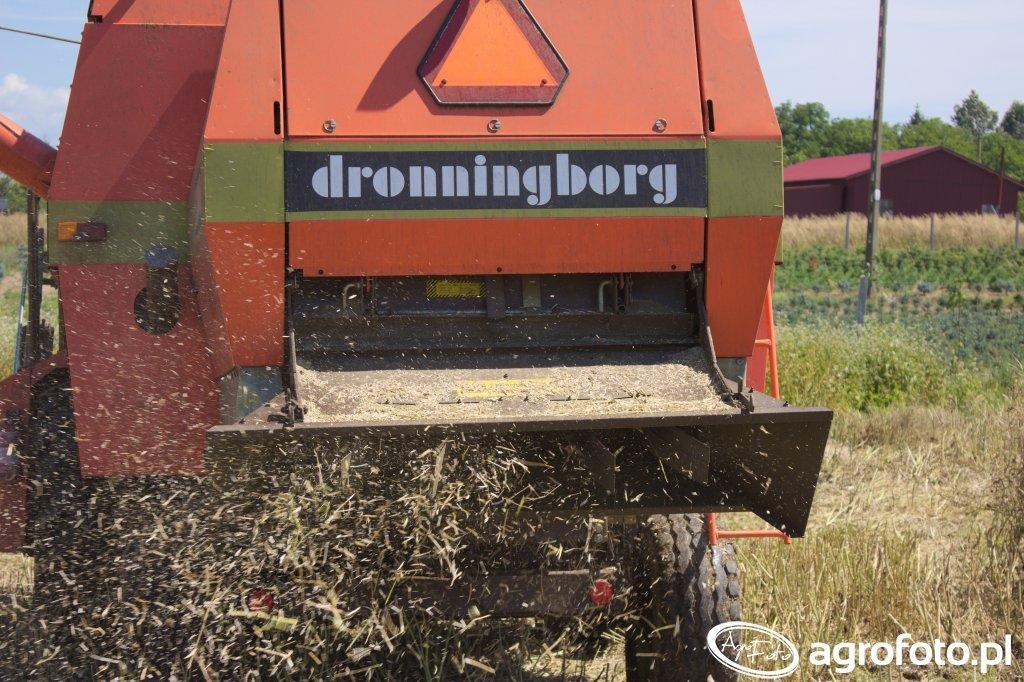 Dronninborg d3000