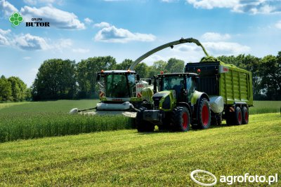 Claas Jaguar 950 + Claas Direct Disc 520, Claas Axion 830 + Claas Cargos 8500