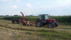 Massey Ferguson + zestaw do ścinki kukurydzy