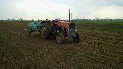 MF 255 i siewnik do kukurydzy