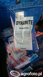 Kukurydza Maïsadour Dynamite