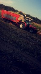 Akcja kukurydza 2016