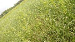 Lucerna z trawą