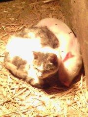 Prosie i Kot