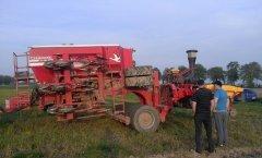 Siew pasowy kukurydzy