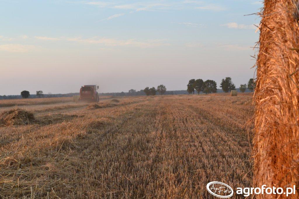 Lely Welger RP 445 - Prasowanie slomy pszennej