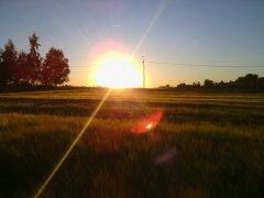 Jęczmień w zachodzie słońca