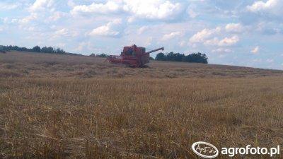 Bizon Z050 w pszenicy