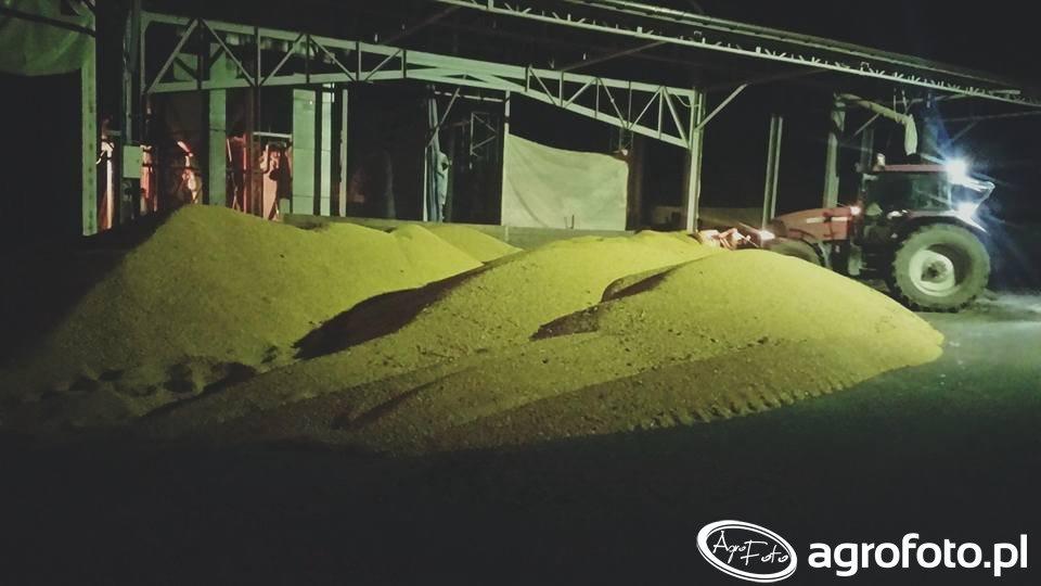 Suszenie kukurydzy & Case MXM 175 pro