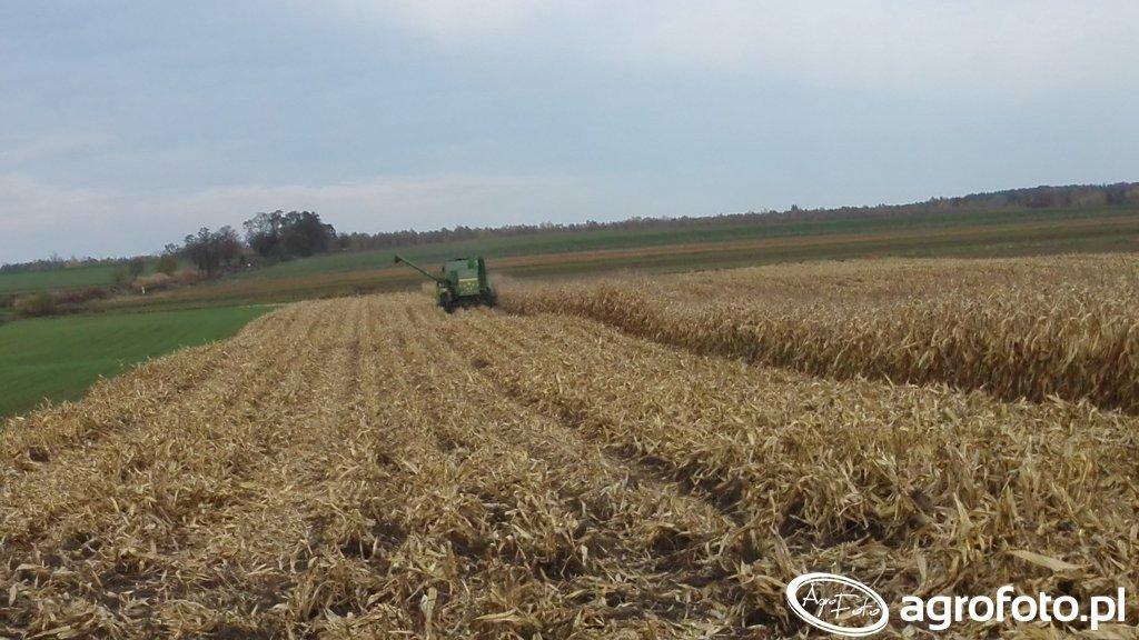 Żniwa kukurydziane 2016