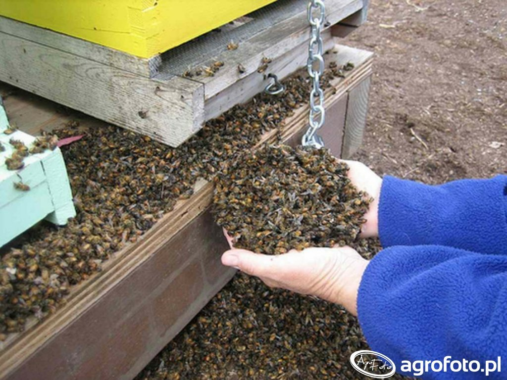 Tragedia pszczelarzy