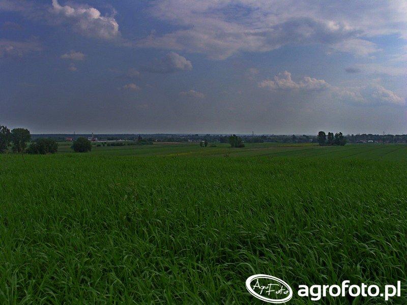 Krajobrazy ziemi staszowskiej