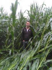 Kukurydza Polska odmiana