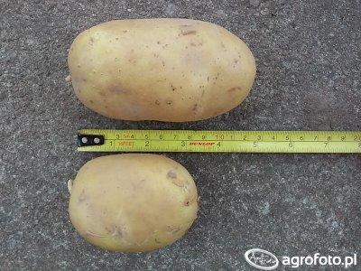 Ziemniaki Catania