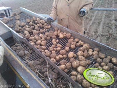 Ziemniaki Kuras