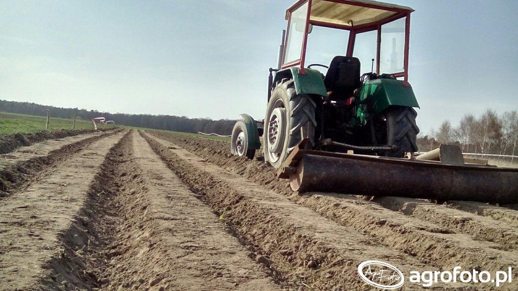 Walcowanie kartofli
