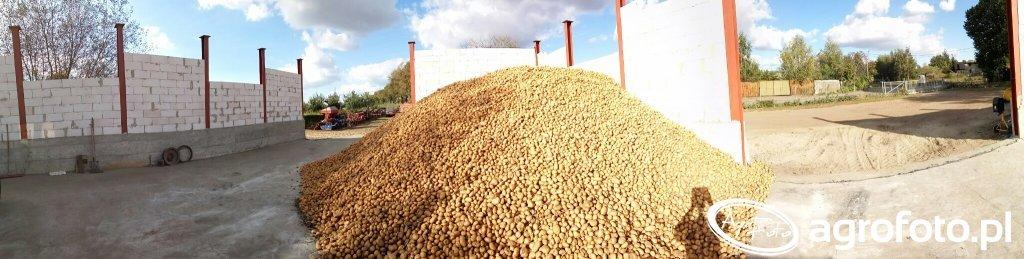 Ziemniaki przemysłowe Glada