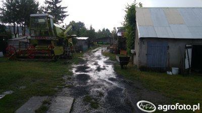Ogród po burzy