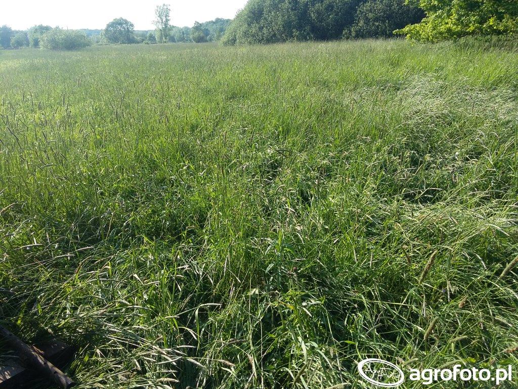Nowe pola