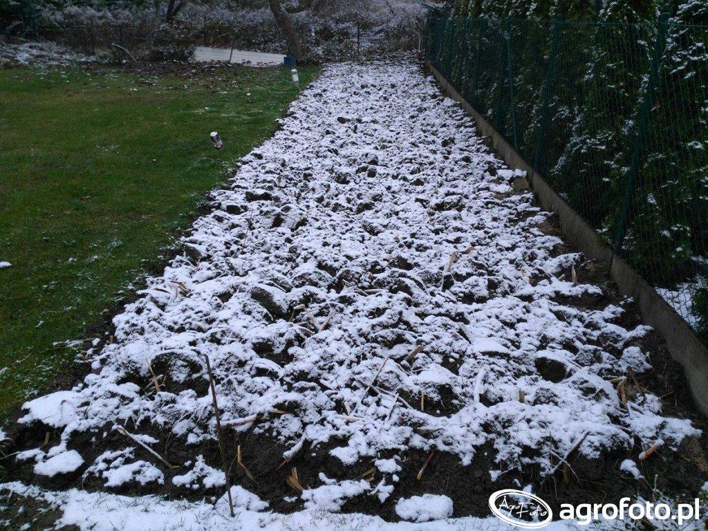 Ogródek na zimę