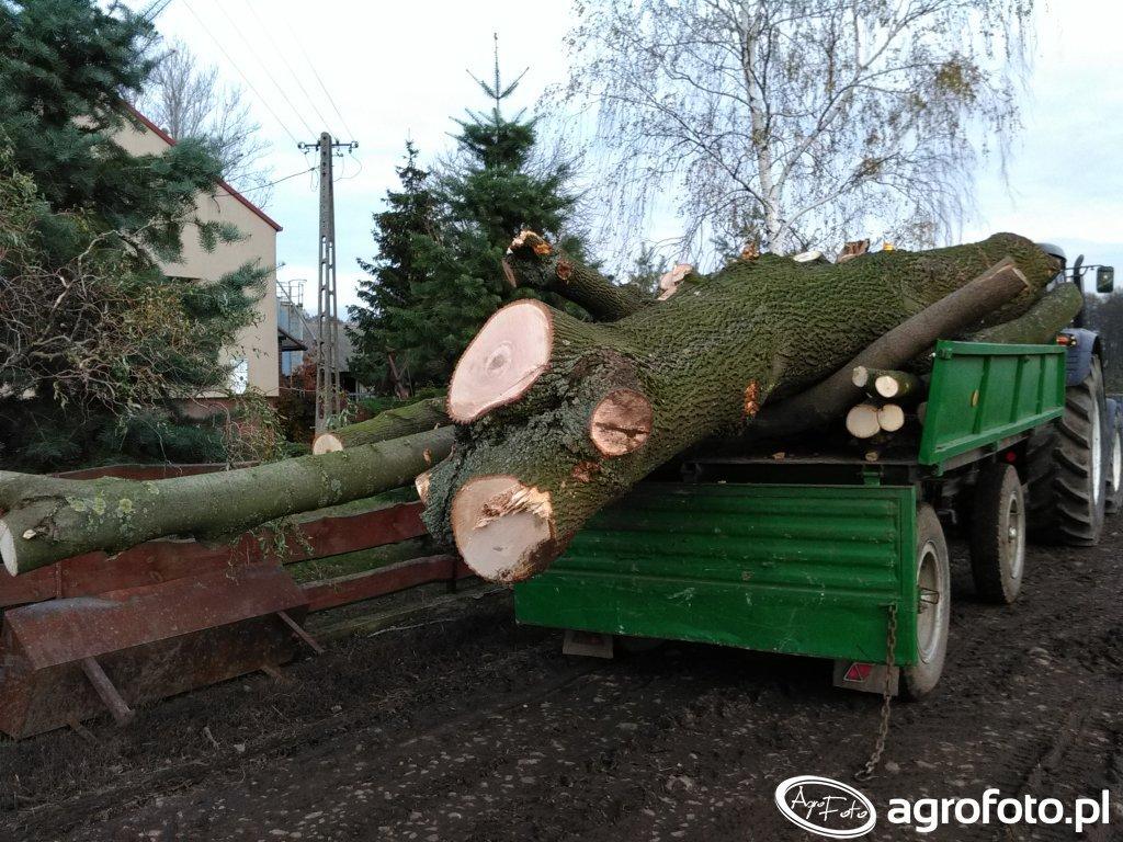 Przewóz drzew
