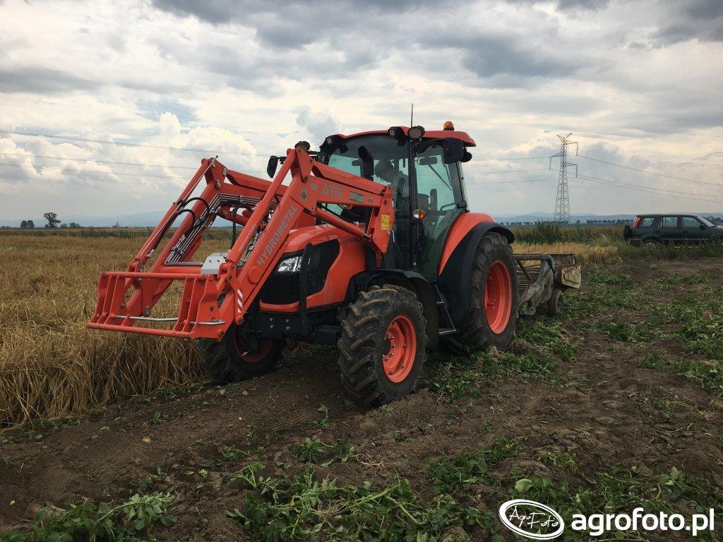 Kubota M7060 - kopanie ziemniaków
