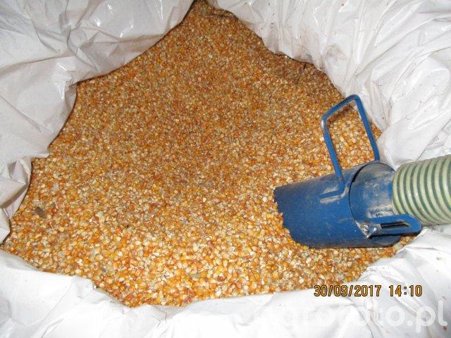 Śrutowanie kukurydzy