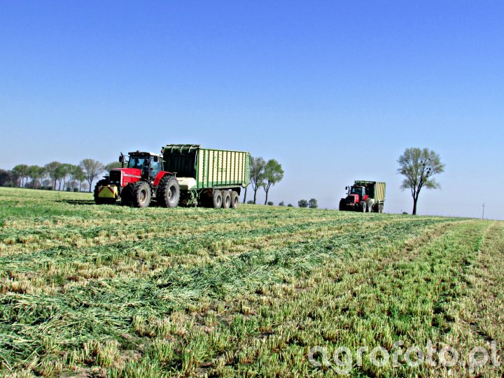 2x Massey Ferguson 8170 & Krone ZX 450/550 GD