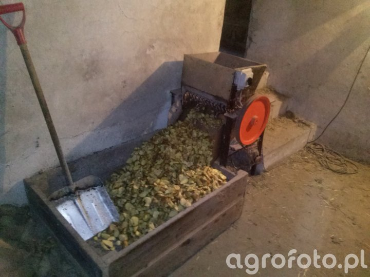 Siekanie kartofli