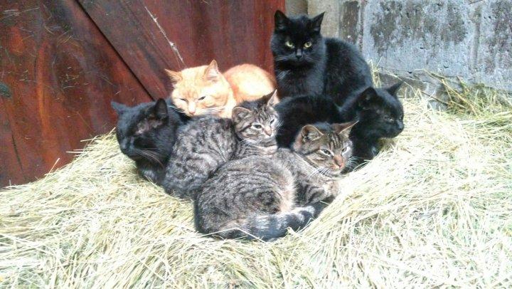 Koty na sianie