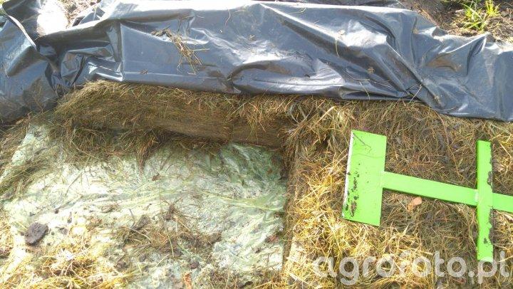 Pryzma trawy