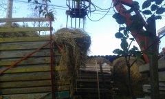 Ostrówek i samozbierająca steyr