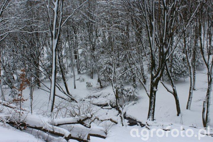 Las w zimowej szacie