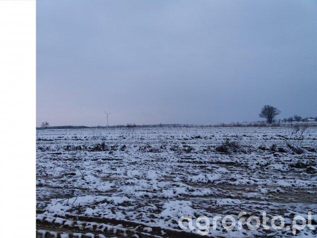 Pola zimą
