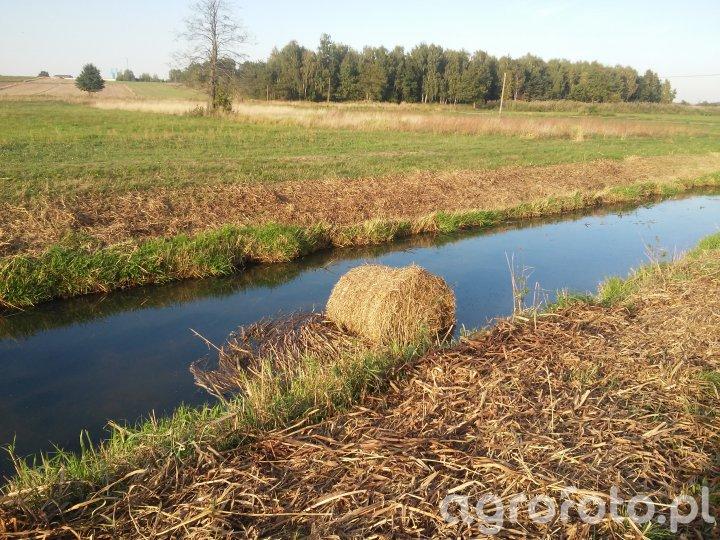 """Bela słomy """"pływa"""" w rzece"""