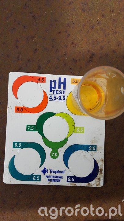 Ph test wody