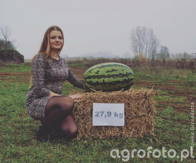 Oficjalny rekord Polski - Arbuz 27,9 kg
