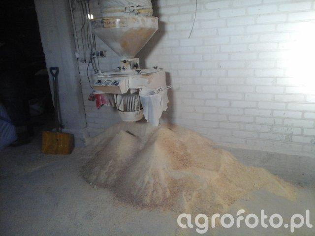 Śrutowanie mokrej kukurydzy