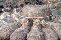 Paśnik dla owiec Kellfri
