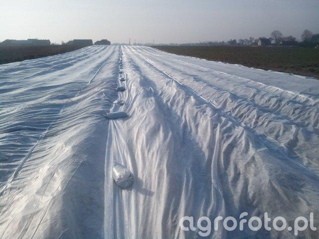 Truskawka zimą