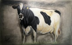 Obraz krowa hf