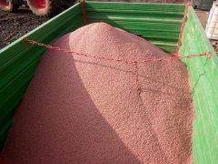 Materiał siewny, Czyszczenie i zaprawianie ziarna