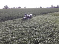 Mieszanka traw kł5