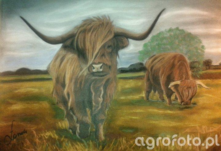 Obraz Highland