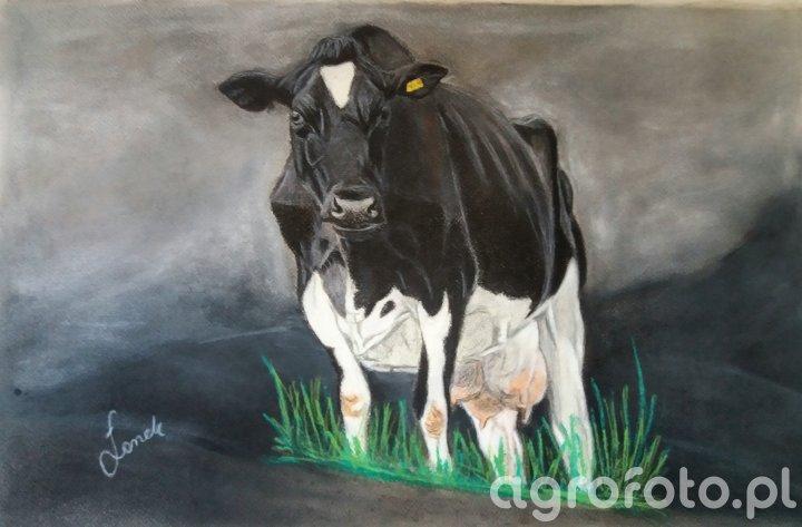 Obraz Krowa hf 2